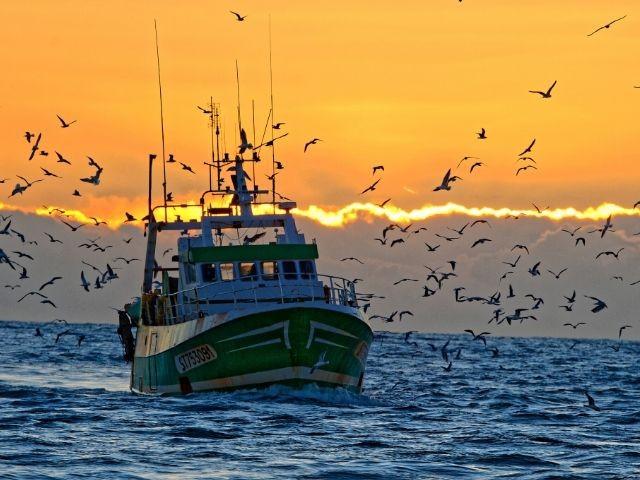 Le Port de pêche, le coeur du Grau