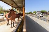 balade-a-cheval-2504