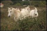 promenade-a-cheval-le-grau-duroi-4-1030