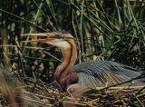safari-pierrot-le-camarguais-faune-et-flore-le-grau-du-roi-640x480-1444