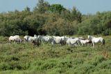 safari-pierrot-le-camargue-la-faune-la-flore-le-grau-du-roi-3-640x480-1451