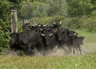 safari-camargue-le-grauduroi5-2-1398