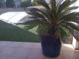 villa-avec-piscine-8-personnes-le-grau-du-roi-port-camargue-valancony-6-3141