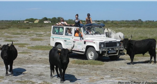 grauduroi-pierrot-le-camarguais-safari-108-7196